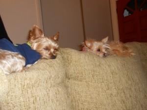 week 1 sleeping dogs yogi may