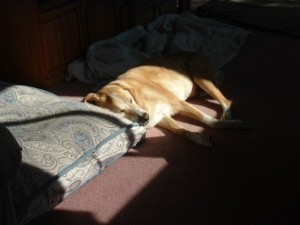 week one sierra sleeping