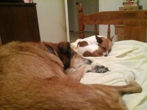 week one sleeping dogs