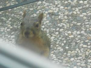 week three squirrel looking at me