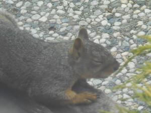 week three squirrel nap